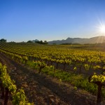 Paysages viticole par Fred fouché Photographe